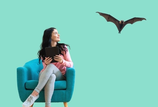 bats nest in your home