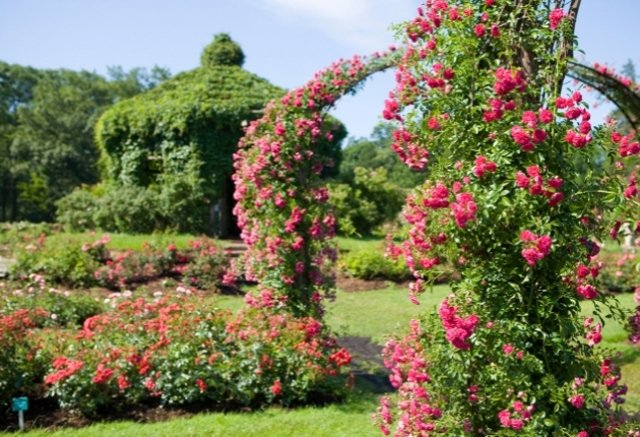 Park of Roses in Clintonville